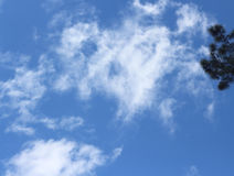 Pine tree in a blue sky with white fluffy clouds Stock Images
