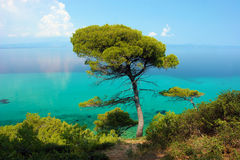 Pine tree and blue and turquoise sea stock photos