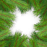 Pine tree border background. High detailed pine branches forming frame around blank white space Royalty Free Stock Images
