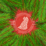 Pine tree border background. High detailed pine branches forming frame around stylized rooster head Royalty Free Stock Photography