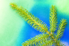 Pine tree branch. Isolated on colorful textured background Royalty Free Stock Images