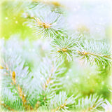 Pine tree branch background Royalty Free Stock Photos