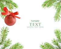 Pine tree branch and Ball christmas Stock Image