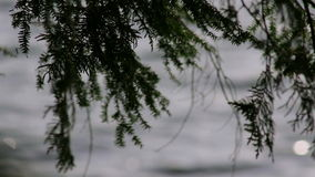 Pine tree branch blowing in the wind over a northern lake stock footage