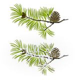 Pine tree Branch and pine cone autumnal and winter snowy vintage  natural background vector illustration editable. Hand draw Royalty Free Stock Photos