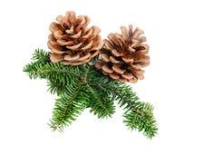 Pine cone Christmas decoration element. Pine tree branch with cone Christmas decoration element royalty free stock image