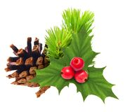 Pine tree branch with cone Stock Photo