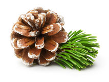 Pine tree branch and cone Royalty Free Stock Image
