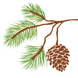 Pine tree branch and cone vector. Illustration of fir tree branch with cone isolated on white + vector eps file royalty free illustration