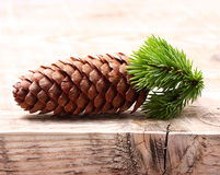 Pine tree branch with cone Royalty Free Stock Images