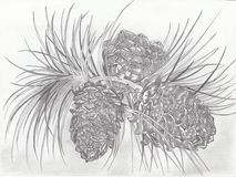 Pine tree branch with cones closeup  on white background. Hand painting on paper.  Pencil drawing Royalty Free Stock Image