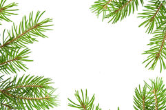 Pine tree branch frame Royalty Free Stock Image