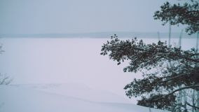 Pine tree branch in front of vast frozen lake covered in snow. On winter cold cloudy day, snowing. Slow motion stock video