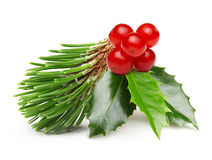 Pine tree branch and Holly berry leaves Stock Photos
