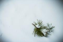 Pine tree branch on Snow Stock Photos