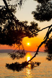 Pine tree branch and sunset Royalty Free Stock Image