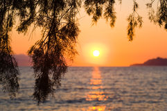 Pine tree branch and sunset Royalty Free Stock Photos