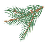 Pine Tree Branches with Cones Christmas Decoration. Pine tree branches with cones for christmas decorations isolated on white. Branch of Christmas tree with pine Royalty Free Stock Photography