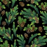 Pine tree branches and cones. Christmas design. Vector seamless pattern Stock Image