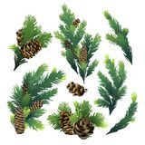 Pine tree branches and cones. Christmas design. Vector design elements isolated on white background Stock Photos
