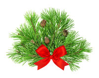 Pine tree branches with cones and red ribbon bow decoration Royalty Free Stock Photo