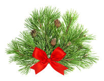 Pine tree branches with cones and red ribbon on white Stock Image