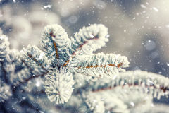 Pine tree branches covered frost in snowy atmosphere Stock Photos