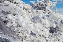 Pine tree branches covered with white snow and ice. Close up pine tree branches covered with white snow and ice Royalty Free Stock Photography