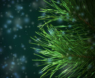 Pine-Tree Branches Decorated Royalty Free Stock Photography
