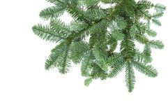 Pine tree branches isolated white background Christmas decoration. Pine tree branches isolated on white background. Christmas decoration royalty free stock photos