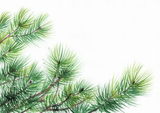 Pine tree branches Stock Images