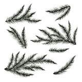 Pine tree branches isolated on white. Vector illustration Royalty Free Stock Photo
