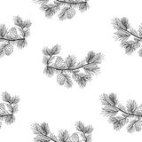 Pine tree branches seamless pattern, transparent background. Royalty Free Stock Photo