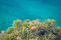 Pine tree branches with turquoise sea background Royalty Free Stock Photo