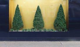 Pine Tree Bush Royalty Free Stock Image