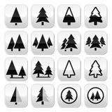 Pine tree  buttons set Stock Photo