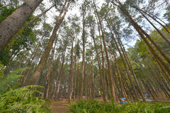 Pine tree among camping parks Royalty Free Stock Photo