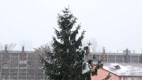 Pine tree in the city in heavy snow storm. In slow motion stock video