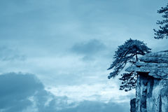Pine tree on the cliff Royalty Free Stock Photography