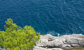 Pine tree. On a cliff Stock Photography