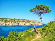 Pine tree at cliff coast Royalty Free Stock Photography