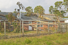 Pine tree collapses on house roof Royalty Free Stock Image