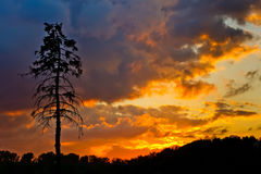 Pine tree and colorful sky Stock Image