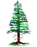 Pine tree. Colorful pine tree watercolor painting stock illustration