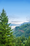 Pine Tree and Columbia River Gorge Royalty Free Stock Images