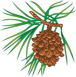 Pine tree cone. Green branch of pine tree with cone Stock Photo