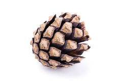 Pine tree cone on white background Royalty Free Stock Photo