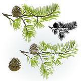 Pine tree and pine cones branch autumnal and winter snowy and silhouette natural background vector illustration editable. Hand draw Royalty Free Stock Images