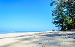 Pine tree continue to the beach and blue sky background. Pine trees on the beach with sand  and blue sky background Stock Images