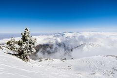 Pine tree covered in frost high on the mountain; sea of white clouds in the background covering the valley, Mount San Antonio (Mt. Baldy), Los Angeles county stock photos